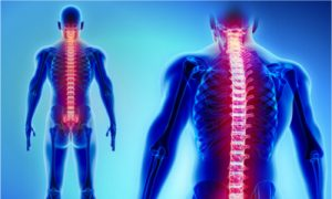 spinal cord connected to lower back pain